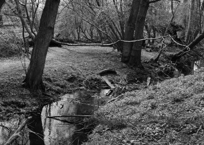 A black and white full close-up of the river, with branches coming in from the right-hand side.