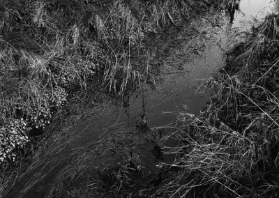 A black and white cropped in close-up of the flowing river surrounded by overgrown grass and weeds.