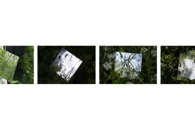 A series of four photographs involving a distorted mirror placed amongst nature during late spring. Photos from left to right Photo 1: the mirror is balancing on a fence post surrounded by overgrown grass and weeds. Photo 2: mirror is placed on the ground in a shaded area mirror is reflecting the sky and the tops of trees. Photo 3: the mirror is placed on the grown submerged by grass and white flowers, the mirror reflects the sky. Photo 4: the mirror is balanced in a bush the mirror reflects the surrounding foliage as well as the sky and the tree opposite the bush. Description text